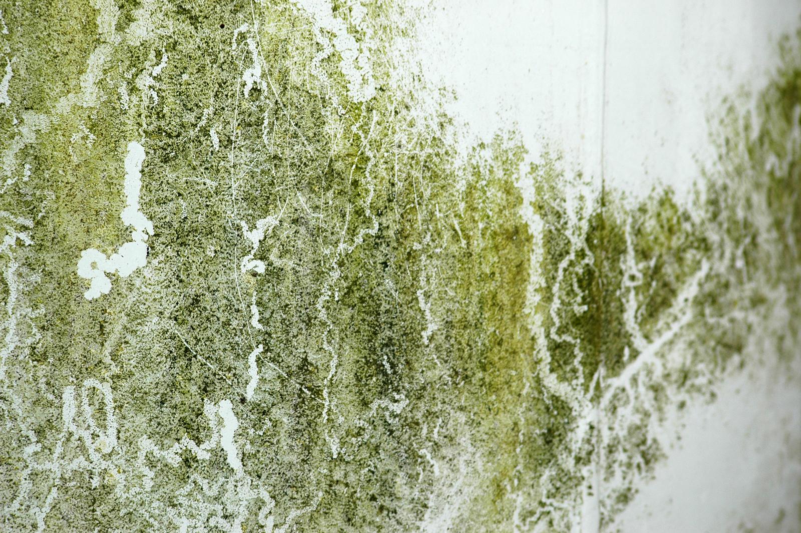 Photoshop texturas 50 texturas hd para photoshop - Manchas de moho ...